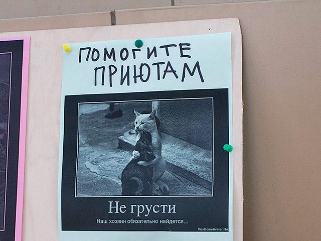 Помощь приютам животных. Краснодар